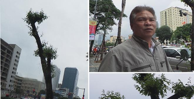 Giải mã hiện tượng lạ: Cây ở Hà Nội 13 năm không có cành