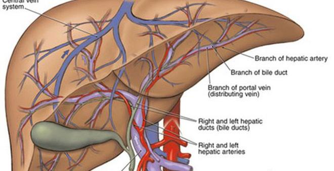 Dấu hiệu dễ nhận ra báo động gan bạn đã nhiễm quá nhiều độc tố