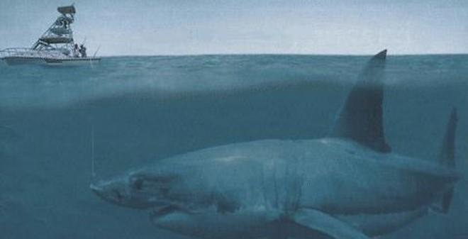 Ẩn số chưa lời giải về quái vật có thể giết chết cá voi lưng gù