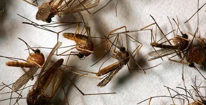 """Vài mẹo nhỏ khiến muỗi phải chạy """"bán sống bán chết"""" khỏi nhà bạn"""