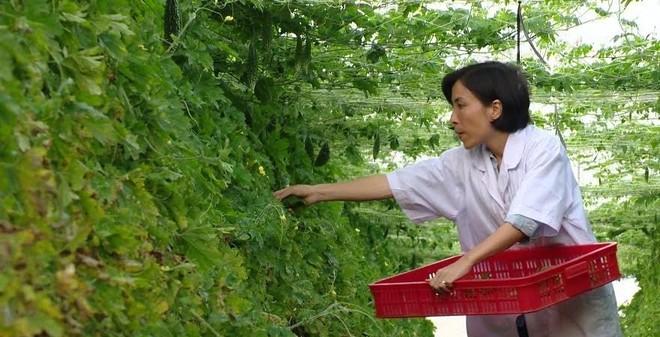 """""""Đút túi"""" cả tỷ mỗi năm nhờ loại cây vô cùng dễ trồng ở VN"""