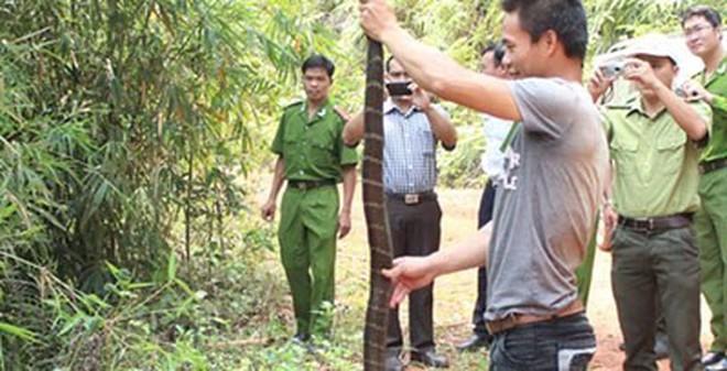 Đắk Nông: Phạm nhân bị hổ mang chúa cắn tử vong khi đi lao động