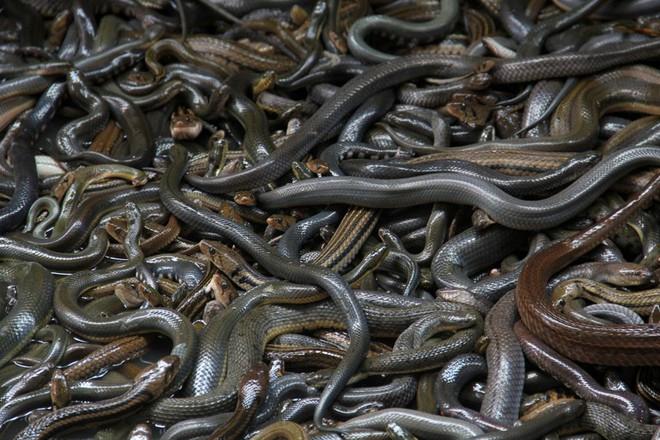 Bí mật đảo hoang nơi có 400.000 sinh vật gây chết người sinh sống - Ảnh 2.