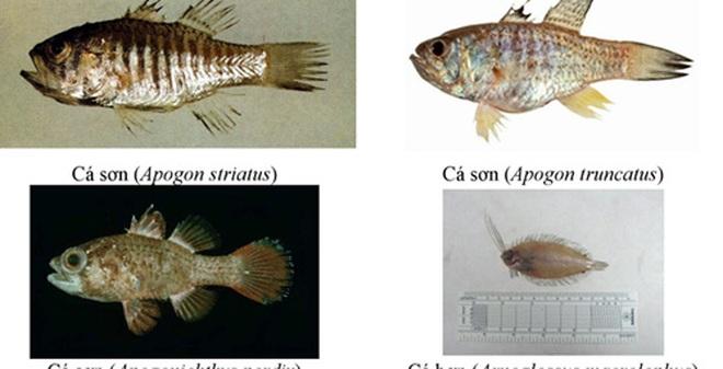 Những loại hải sản nào vẫn chưa ăn được sau sự cố cá chết