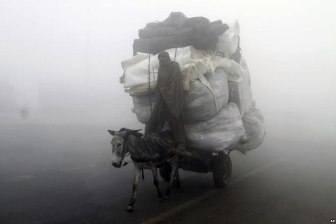 7 ngày qua ảnh: Sinh vật ngoài hành tinh khổng lồ dạt vào bờ biển New Zealand - Ảnh 12.