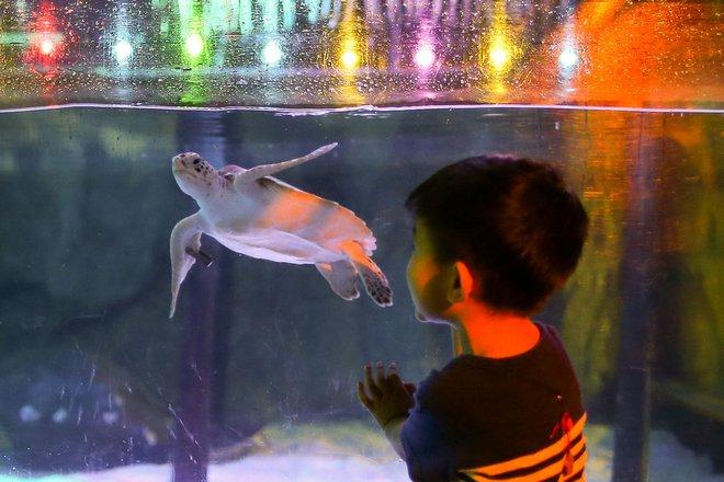 24h qua ảnh: Rợn người cá mập khổng lồ cắn đứt ống thở của thợ lặn - Ảnh 11.