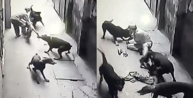 Đau thương: Người đàn ông dắt chó bị cắn xé tơi tả