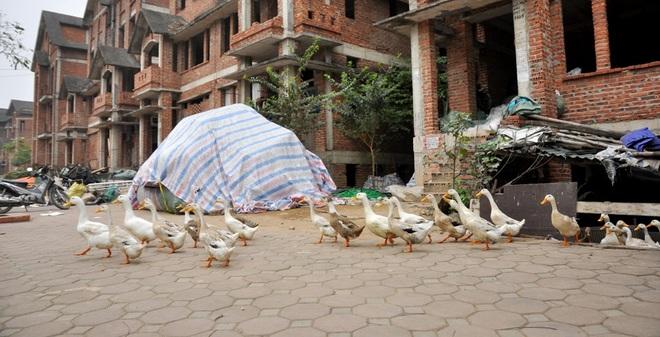 Biệt thự triệu đô ở Hà Nội biến thành chuồng vịt