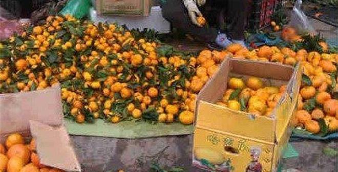 Tiết lộ sốc của người đi buôn hoa quả Trung Quốc 15 năm