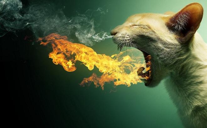 Trận Mèo Lửa: Trận đánh kỳ lạ bậc nhất lịch sử Việt Nam, hiếm thấy trên thế giới