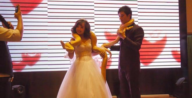 Cặp đôi chơi trội tặng trăn vàng cho nhau trong lễ cưới