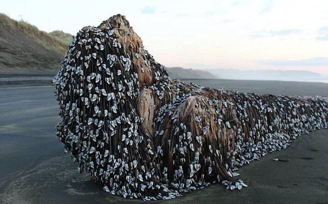 7 ngày qua ảnh: 'Sinh vật ngoài hành tinh' khổng lồ dạt vào bờ biển New Zealand