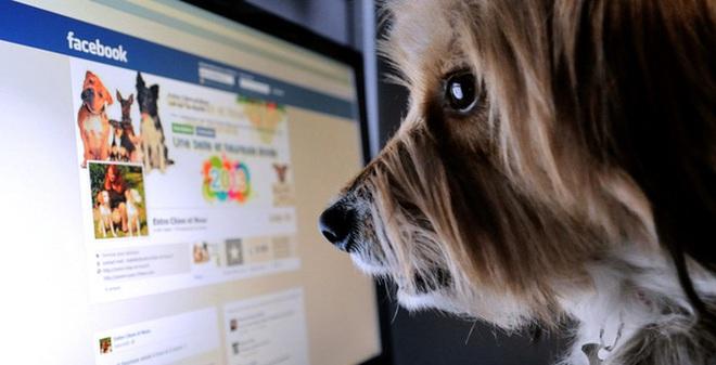 Tin buồn: Facebook đang khiến chúng ta suy nghĩ một cách thiển cận