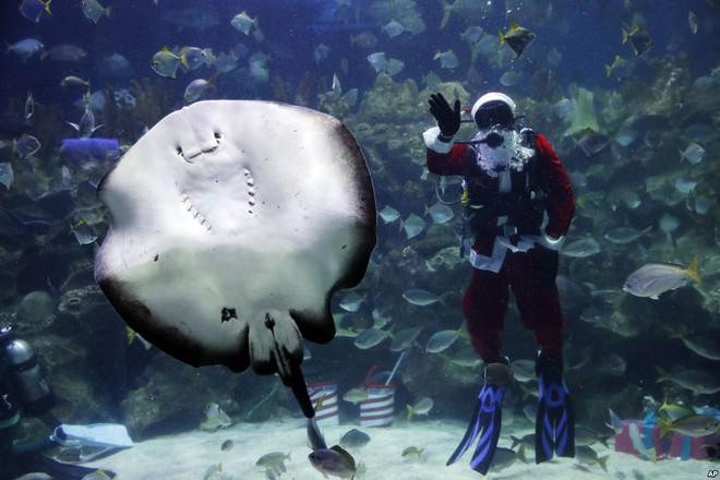 7 ngày qua ảnh: Sinh vật ngoài hành tinh khổng lồ dạt vào bờ biển New Zealand - Ảnh 10.