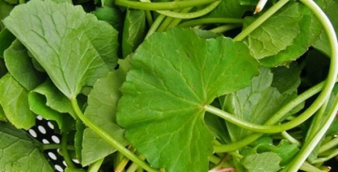 Nguy hại của những loại rau nhà bạn vẫn ăn hằng ngày