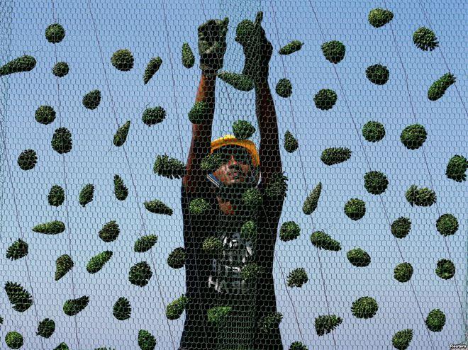 24h qua ảnh: Lính chống bạo động hứng cơn mưa củ đậu bay từ cổ động viên bóng đá - Ảnh 9.