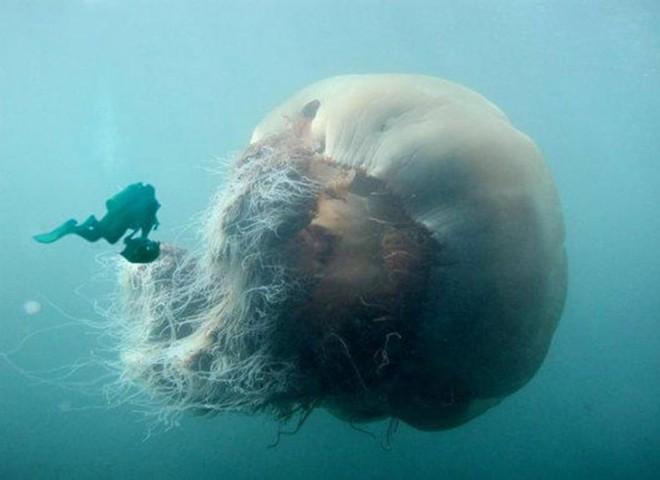 Hội chứng sợ biển: Nỗi ám ảnh kinh hoàng đến từ đại dương! - Ảnh 12.