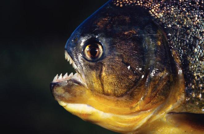Bí mật chết chóc ở thế giới ngầm đáng sợ nhất rừng già Amazon - Ảnh 5.