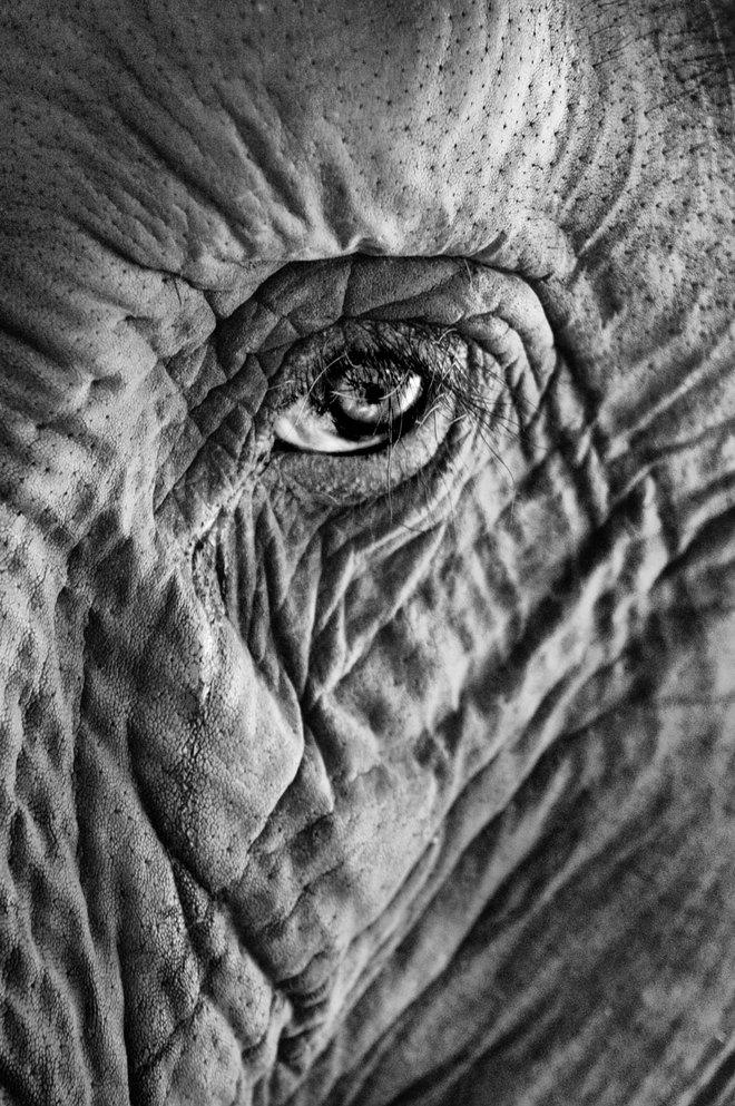 Những khoảnh khắc thấm đẫm tình người của các loài động vật - Ảnh 4.