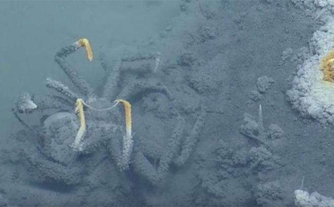 Khám phá ra hồ nước dưới lòng đại dương, sinh vật sống bơi vào vùng nước này hầu hết đều bỏ mạng