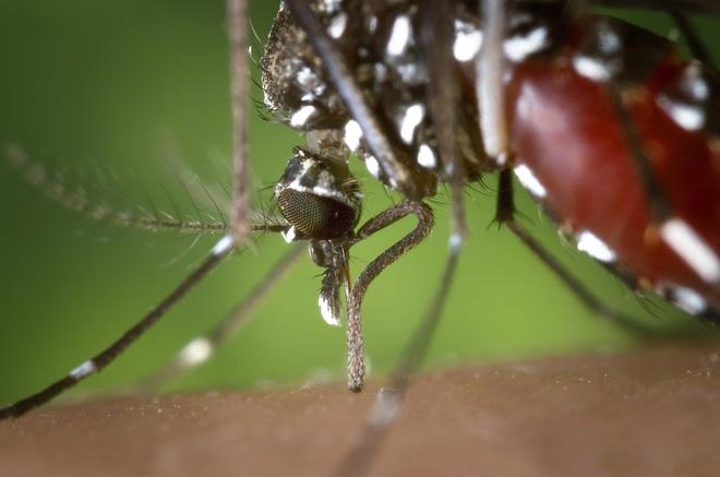5 căn bệnh chết người do biến đổi khí hậu - Ảnh 2.