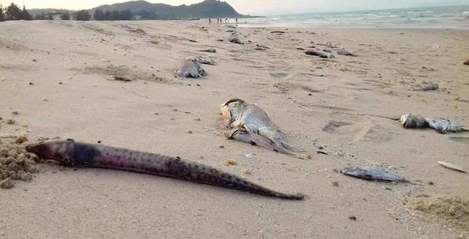 Cấm sử dụng hải sản trong vùng 20 hải lý gần bờ 4 tỉnh miền Trung