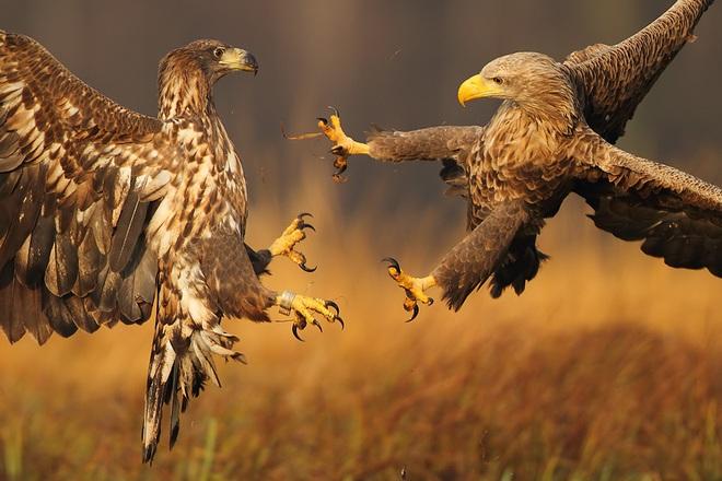 Những khoảnh khắc thấm đẫm tình người của các loài động vật - Ảnh 1.