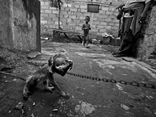 Đời buồn của những chú khỉ đeo mặt nạ tại Indonesia