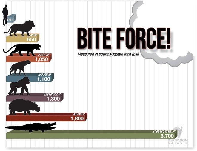 Quên ngao Tây Tạng đi, đây mới là loài chó có cú cắn hủy diệt nhất thế giới - Ảnh 4.