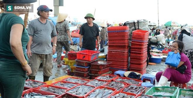 Hải sản khai thác thế nào được coi an toàn ở 4 tỉnh miền Trung?