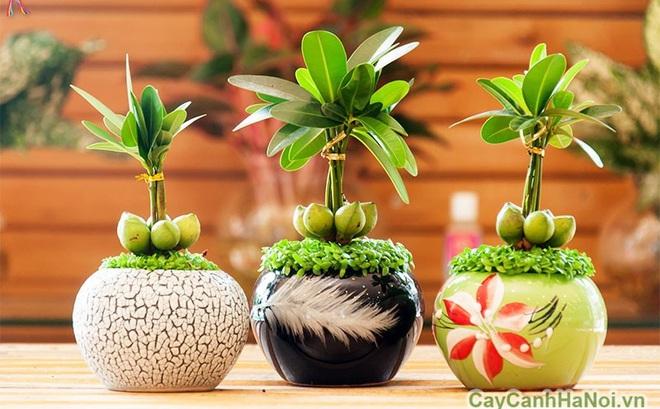 Đặt những loại cây phong thủy này trên bàn, tài vận của bạn sẽ lên như diều gặp gió
