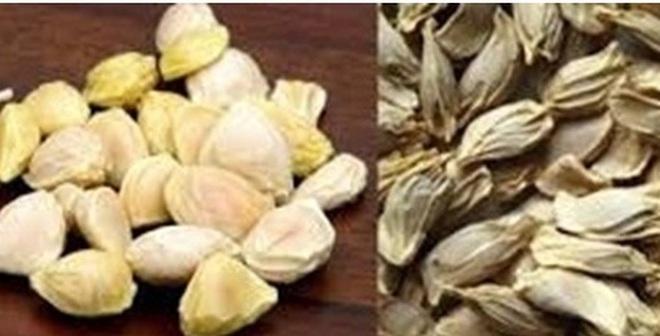 Có thể bạn chưa biết về công dụng của hạt bưởi?