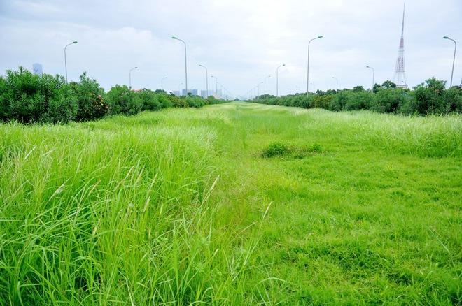 Đã phát hiện đơn vị liên quan đến việc cắt cỏ tốn 53 tỷ đồng/năm - Ảnh 10.