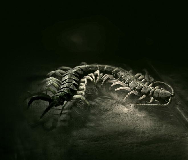 Tử chiến kinh hoàng giữa rắn đầu đen vs rết cực độc và cái kết khó ngờ - Ảnh 3.