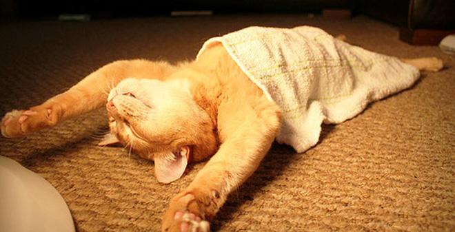 Đây là 4 mánh khóe giúp bạn ngủ ngon ngay cả khi mất điện giữa trời mùa hè nóng nực