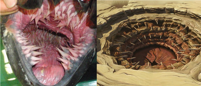 Bạn có đoán ra quái vật nào có cái miệng đáng sợ như thế này? - Ảnh 1.