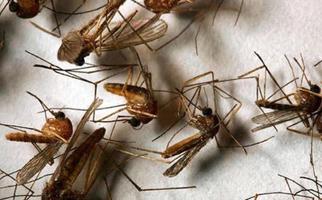 Chẳng cần xịt thuốc, 10 thứ sẵn có dưới đây sẽ giúp nhà bạn sạch bóng muỗi