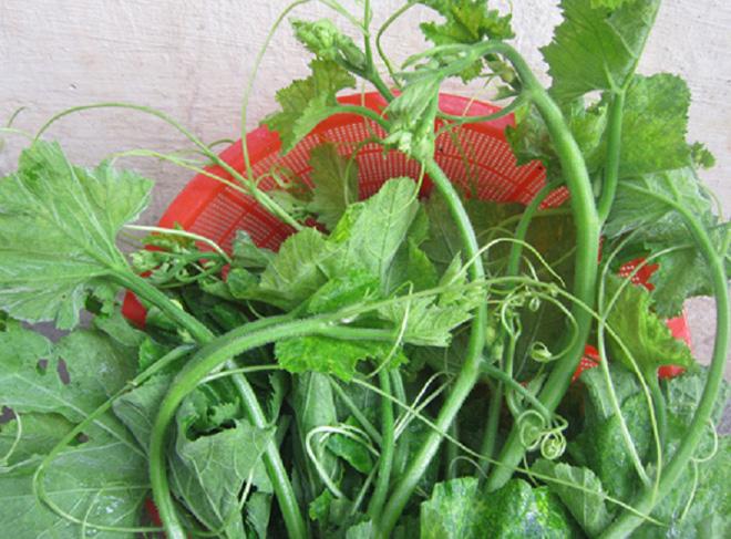 9 tác dụng chữa bệnh không thể bỏ qua của ngọn và hoa bí đỏ - Ảnh 4.
