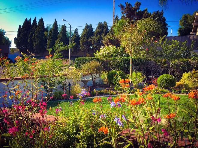 Ngắm ngôi nhà thanh bình và khu vườn đẹp lung linh trên đất Mỹ của MC Nguyễn Cao Kỳ Duyên - Ảnh 2.