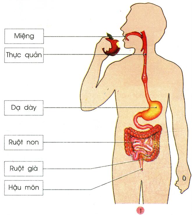 3 bí quyết thương lấy đường ruột để sống khỏe mạnh không bệnh tật - Ảnh 2.