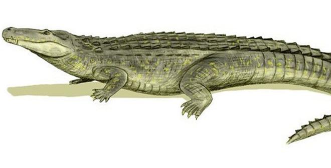 Hàn Thuyên và sự tích kỳ lạ đánh đuổi cá sấu ngay giữa sông Hồng!