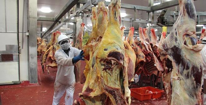 Quy trình giết mổ bò đúng tiêu chuẩn ở Australia