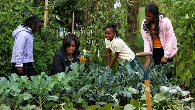 Loại cây được ví là sâm nam của VN có trong vườn nhà Obama - Ảnh 5.