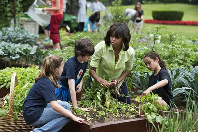 Loại cây được ví là sâm nam của VN có trong vườn nhà Obama - Ảnh 16.
