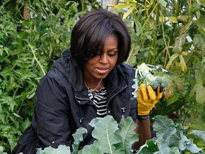 Loại cây được ví là sâm nam của VN có trong vườn nhà Obama - Ảnh 17.