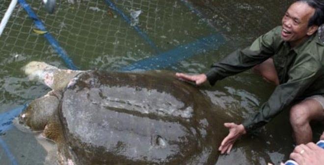 Hồ Gươm nên có rùa nữa hay không?