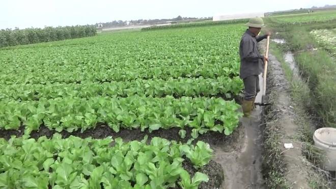Ông Bộ trưởng NN&PTNT rơi nước mắt khi người bán rau hất gánh rau xuống đường - Ảnh 4.