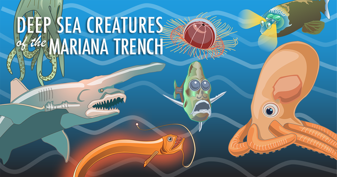 Những quái vật biển thống lĩnh vùng biển sâu nhất hành tinh - Ảnh 1.