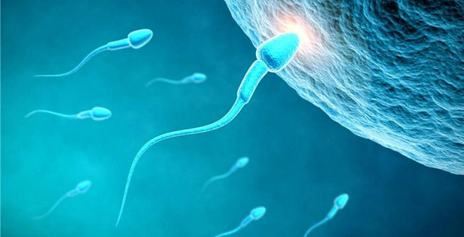 4 bí quyết giúp bồi bổ tinh trùng, giúp tăng khả năng thụ thai