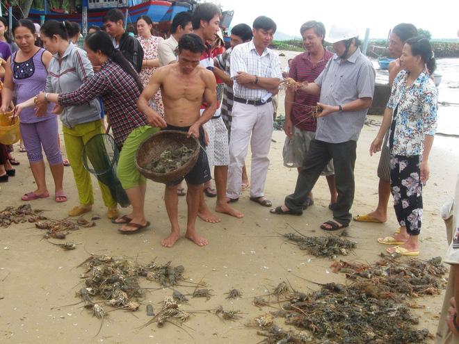 [ẢNH] Xót cảnh tôm hùm chết hàng loạt, người dân bỗng chốc trắng tay ở Phú Yên - Ảnh 5.